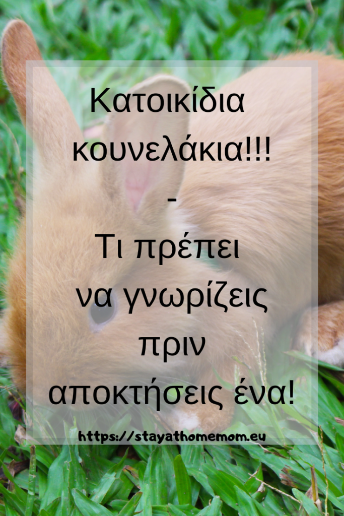 Κατοικίδια κουνελάκια - Όσα πρέπει να ξέρεις πριν αποκτήσεις το δικό σου! | Pet Bunnies  - What you should know